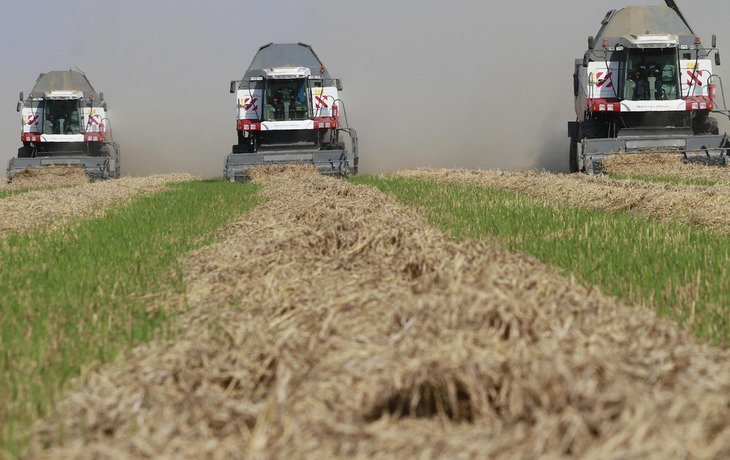 На Кубани собрали рекордный урожай риса