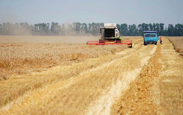 На Кубани собрали рекордный урожай зерновых культур