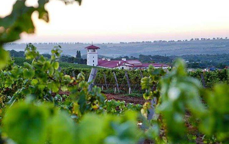 «Лефкадия» в 2017 году планирует увеличить производство вин на 51,8%