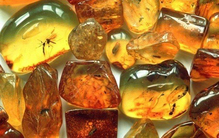 В Краснодаре 17 мая откроется выставка «Доисторические насекомые в янтаре»